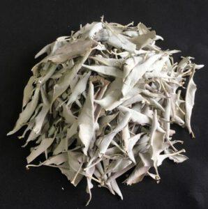 白鼠尾草散裝葉